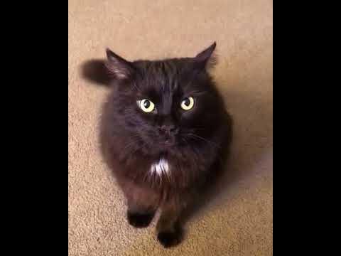 """Не стоит говорить коту: """"Нет!"""""""