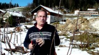 #308 Schneiden im Garten 2011 - Obstbäume in Doren Bregenzerwald 4v8 (3-fach veredelter Apfelbaum)