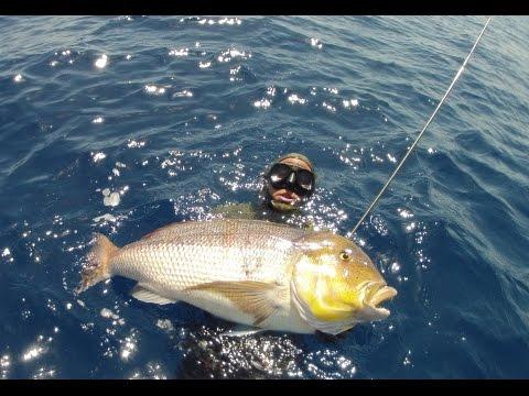 un dentice enorme durante una pescasub