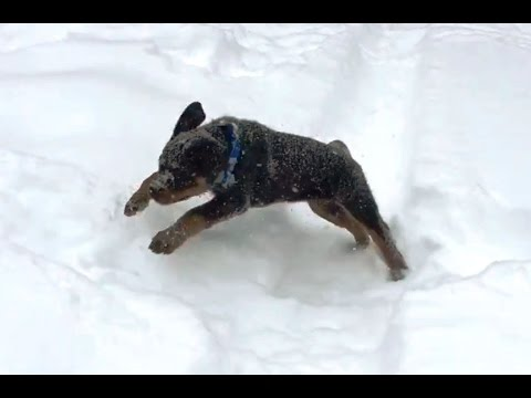 Puppies Playing in the Snow!