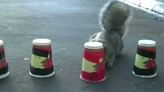 Squirrel Memory test? MUST SEE!!!!!
