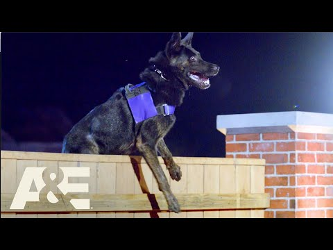 How to Find Drugs With a K9 | America's Top Dog (Season 1) | A&E