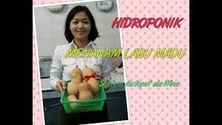 Video Menanam Labu Madu, Hidroponik Autopot Ala Wina MP3, 3GP, MP4, WEBM, AVI, FLV September 2018