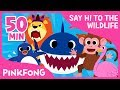 Welcome to Safari | Animal Songs | + Compilation | Pinkfong Songs for Children