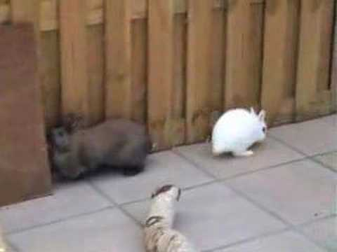 konijntjes spelen buiten
