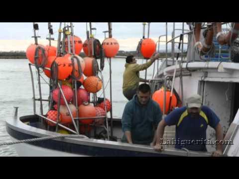Alijo del pez espada en el Puerto de Isla Cristina