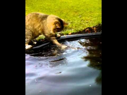 видео рыбака котик
