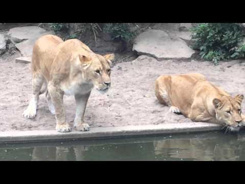 Гибель глупой цапли в зоопарке