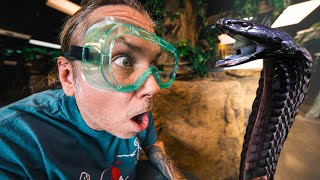 SPITTING COBRAS at my REPTILE ZOO!! | BRIAN BARCZYK by Brian Barczyk