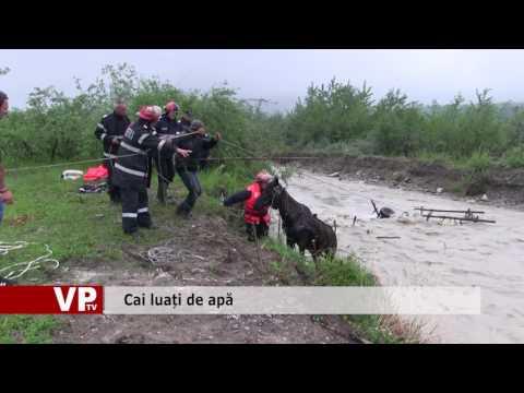 Salvare in extremis: cai luați de apă