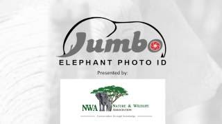 Jumbo Elephant Photo ID