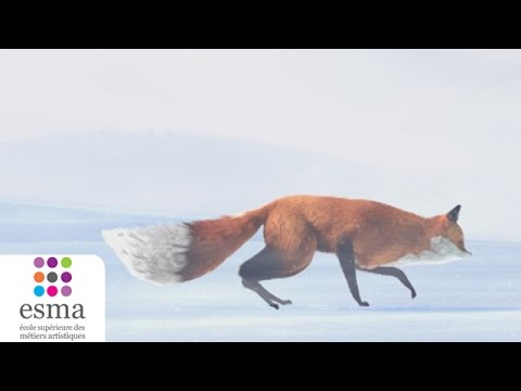 Le film d animation du jour l histoire du renard et de la souris curiosit - L histoire de la souris ...