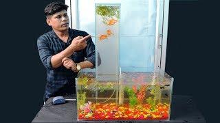 Video മായമല്ല മന്ത്രമല്ല.. ഇത് വെർട്ടിക്കൽ അക്വാറിയം | How To Make Vertical Aquarium At Home In Malayalam MP3, 3GP, MP4, WEBM, AVI, FLV September 2018