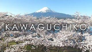 Mt.Fuji from Lake Kawaguchi with sakura / 河口湖と桜