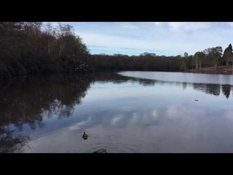 Obelisk Pond, Savill Garden, Windsor Great Park, Englefield Green, Egham, Surrey #savillgarden