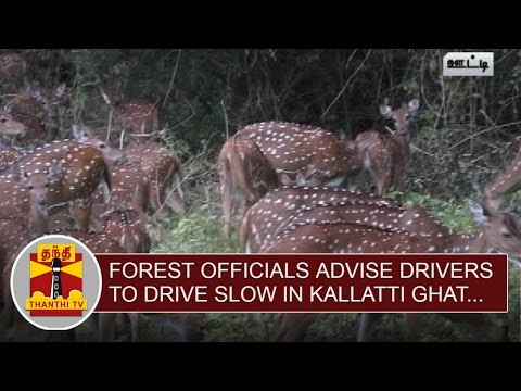 Forest-Officials-advise-Drivers-to-drive-slow-in-Deers-Roaming-Area-at-Kallatti-Ghat-Thanthi-TV