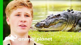 Moving The Biggest Croc At Australia Zoo   Crikey! It's The Irwins by Animal Planet