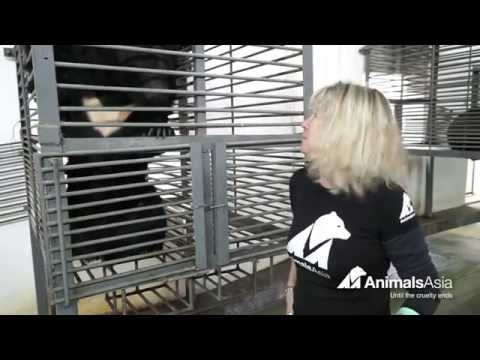 Animals Asia rescue team appeal