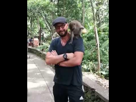 Zenga's Karma: ecco la scimmia… dell'Uomo Ragno!