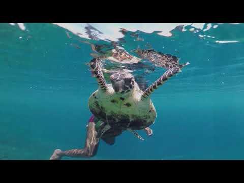 Snorkel on the desert island of Ofu, Raja Ampat, Papua (Indonesia)