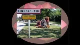 Lingolsheim France  city pictures gallery : Lingolsheim - Alsace - France