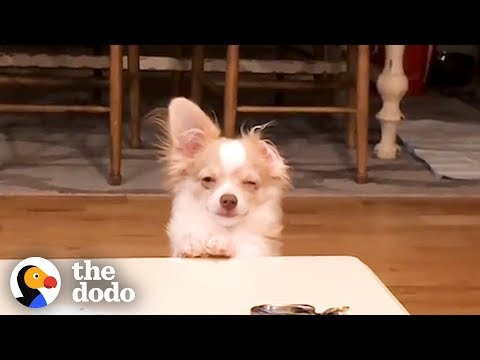 Funny animals - Funny Guilty Dogs Compilation  The Dodo