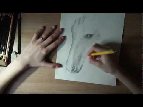 Let´s draw – Pferd/Horse