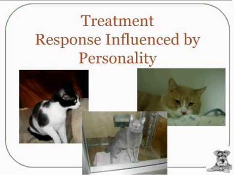 Helping Cats Who Hiss and Hide: Assessments, Behavior Modification and Re-Homing Strategies