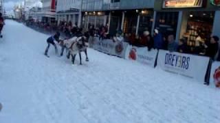 Wyścigi Reniferów Tromso 2010 p.3