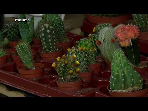 Як вибрати кімнатні рослини для дому [ВІДЕО]
