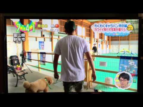 ZIPやNHKにも出演の飛行犬撮影会開催!11/12(土)@射水大島店