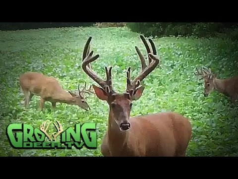 Hunting Whitetails: Treestand Locations,  Where And Why (#297) @growingdeer.tv