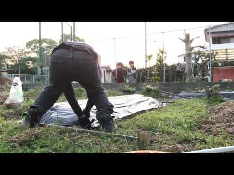 動画で家庭菜園『夕方の作業、白ナス、シシトウ植え付けまで』2倍速とうしで撮影