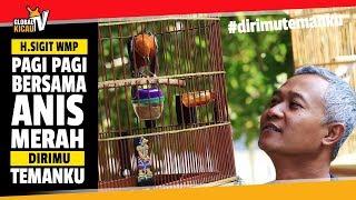 Video SUARA BURUNG : H.Sigit WMP Pagi-Pagi Bersama Anis Merah Teler #dirimutemanku MP3, 3GP, MP4, WEBM, AVI, FLV Juni 2019