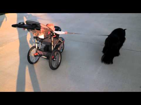 Dog Pulling Baby Carriage