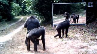Download Lagu What Happens When Scientists Install A Mirror In The Hoodest Part Of The Jungle? (Spoof) Mp3
