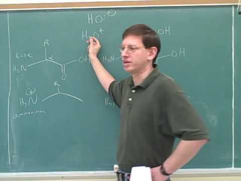 Organic chemistry: Amino acids and peptides (1)