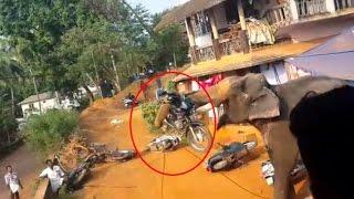 Elephant attack in Valanchery Kerala | Latest News