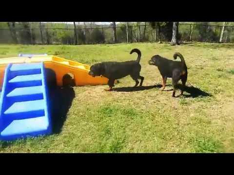 K-9 Ranch Dogs 04/08/17 (видео)