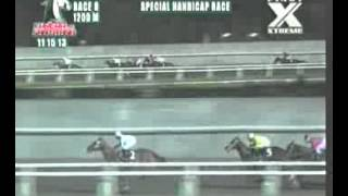 RACE 8 MONEY KING 11/15/2013