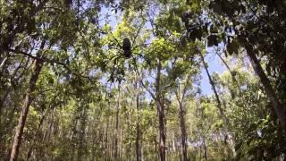 Yungaburra Australia  city images : Yungaburra, Australia Spider
