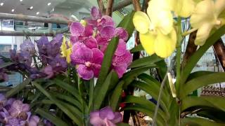 Bangkok Living&Travel Flower Markets Exotic Orchids Part 2