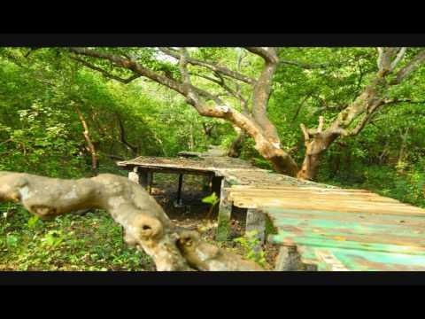 Mada Forest in Kakinada Andhra Pradesh