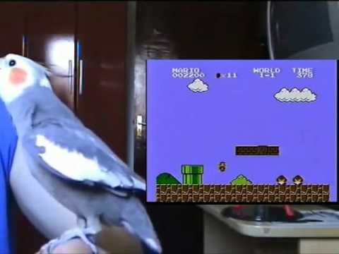 video de Perico silbando la cancion de Mario Bros