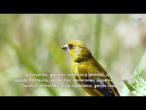 Birding Málaga. Ver aves en El Chorro