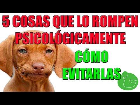5 Cosas que le Haces a tu Perro y que Odia Profundamente