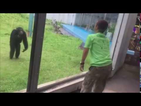 Tää Apina on kyllä ihan messissä – Jump Around