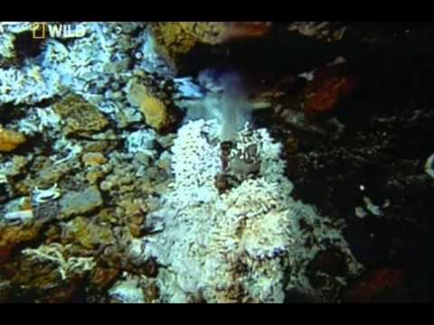 Тайны морских глубин. Неизвестный мир (видео)