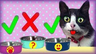 Выбери правильную МИСКУ или Новый Сосиска ЧЕЛЛЕНДЖ для котов