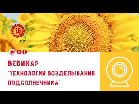 вэбинар Лимагрен по особенности технологии возделывания подсолнечника